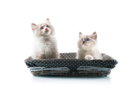 Adorable cats on isolated white background