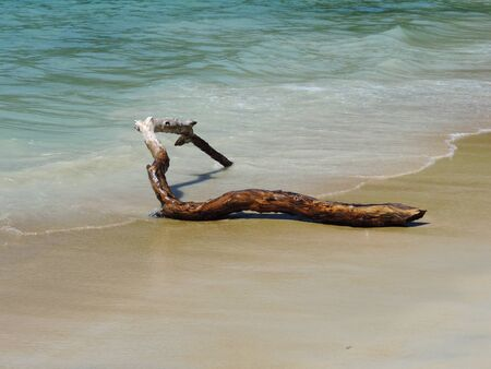 A broken tree branch in the beach shallow sea
