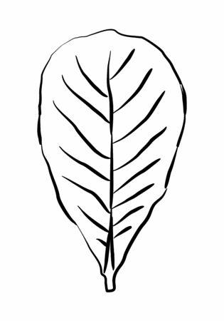 Leaf freehand style illustration.