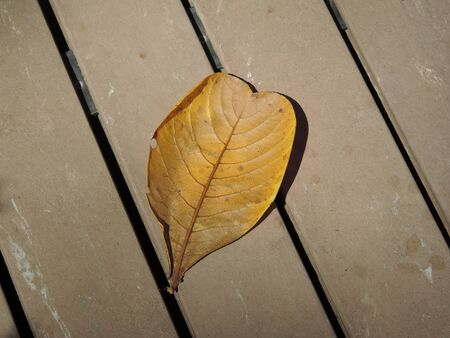 A fallen leaf on the wooden floor