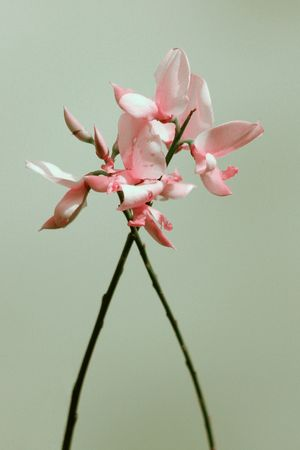naturaleza: Pink flowers Stock Photo