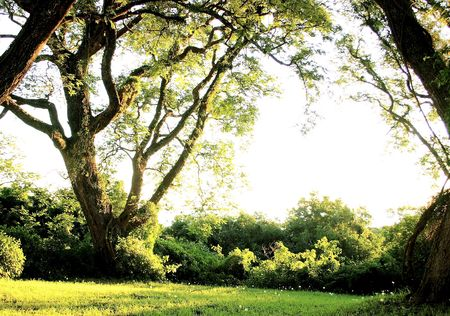 verde: landscape with trees and afternoon light Stock Photo