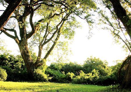 arbol: paisaje con �rboles y tarde luz
