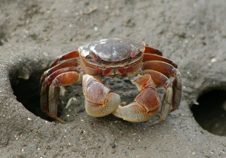 crab Stock Photo - 342662