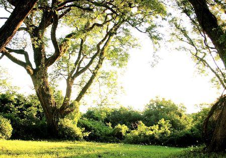 naturaleza: landscape