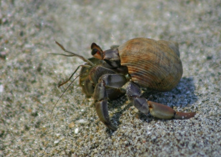 Hermit crab photo