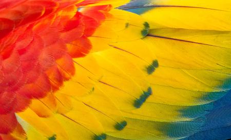 잉 꼬의 화려한 깃털의 질감 스톡 콘텐츠 - 107158506
