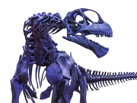 menacing: Isolated menacing tyrannosaurus rex skeleton Stock Photo