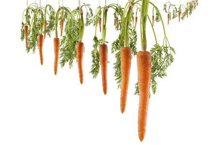 Bunch of lined carrots hanging on strings on a white background as a concept of continuous motivation