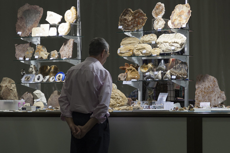 fossils: Man carefully analyzing some specimens in a fossils exhibition
