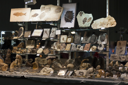 exhibitions: Stand with several specimens in a fossils exhibition