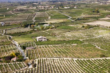 Vineyard in Laguardia