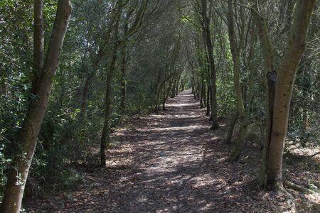 Walkway entering into the forest Banco de Imagens