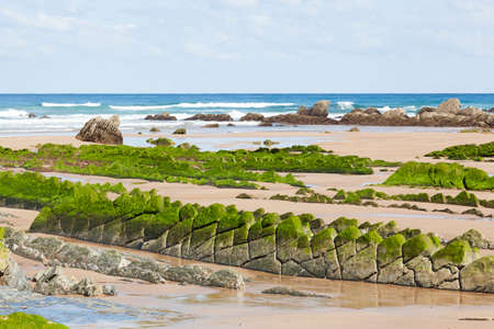 Flysch rock formation with green seaweed at the Barrika beach in Biscay, Spain
