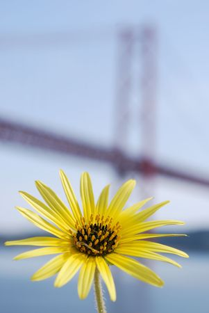 Yellow Daisy with Lisbon Bridge - April 25th Background photo