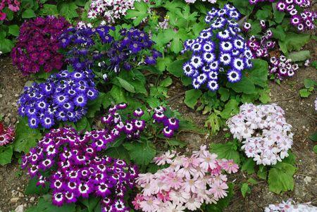daisys: Beautiful Colorful Daisys on a Park