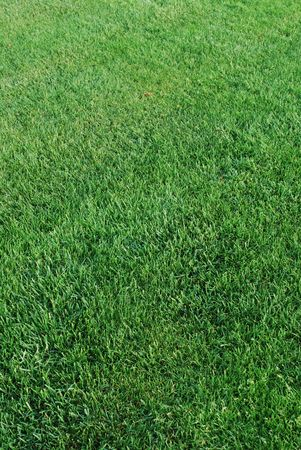 green grass background on a field Stock Photo - 4710114