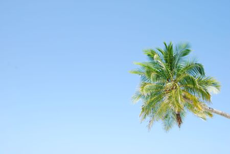 photo of a coconut palm tree against blue sky background photo