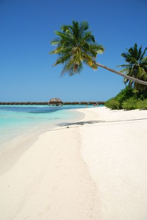 beautiful scene beach with gorgeous palm tree in Maldives photo