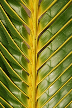 closeup photo of a coconut palm tree background photo