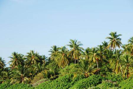 photo of coconut palm trees against blue sky background Stock Photo - 5432905