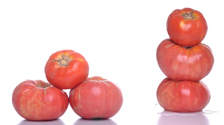 beautiful set of biological tomatoes isolated on white background photo