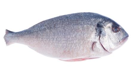 raw dorado fish isolated on white background photo