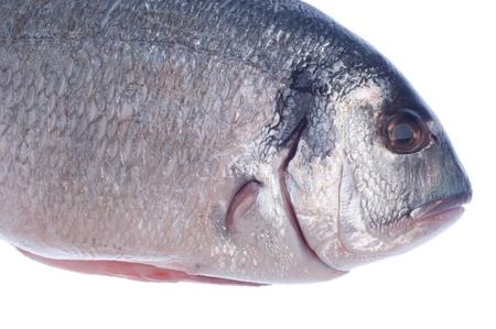 raw dorado fish isolated on white background Stock Photo - 8627396