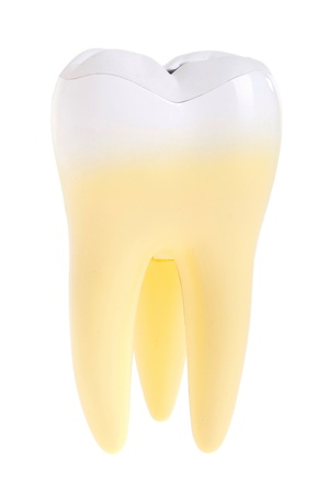 gorgeous molar tooth isolated on white background photo