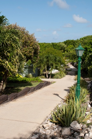 trailway: pathway in a tropical resort surrounded by tropical nature (aloe vera and palm trees) and lamp post