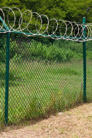mesh fence: barbed wire and circular razor wire on a green fence (tropical nature background)