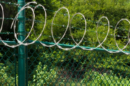 barbed wire and circular razor wire on a green fence (tropical nature background) Stock Photo - 10794370