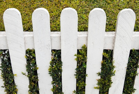 white fence with green hedge at a small house garden photo