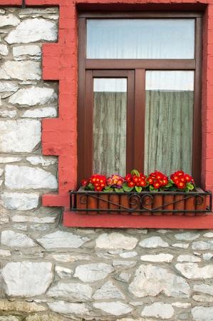 irish window with gorgeous primula piano flowers photo