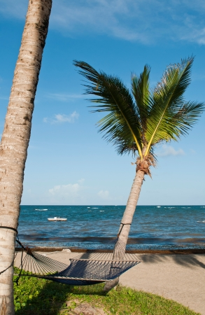 saint lucia: tropical setting with a empty hammock between two palm trees on a beach at Vieux Fort, Saint Lucia