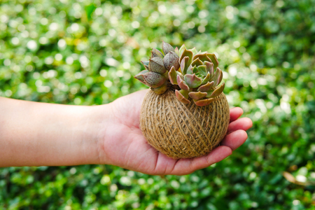 Cute small green succulent plant in rope ball pot on woman hand background , close up Stock Photo
