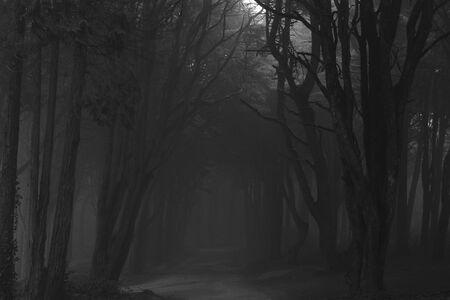 Der mystische Nebel des Sintra-Walds Standard-Bild
