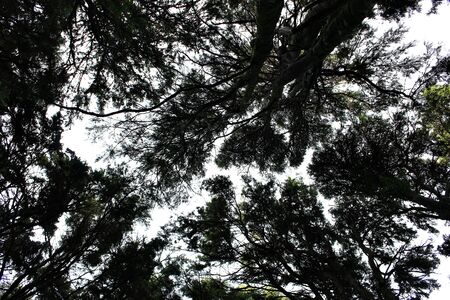 low angle view of the trees in the forest of Sintra, portugal