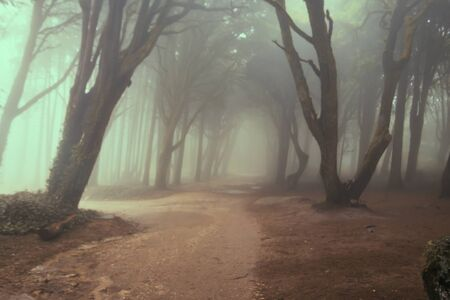 The mystical fog of the Sintra forest, Portugal