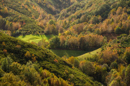 Autumnal view of aforest and meadows in Galicia