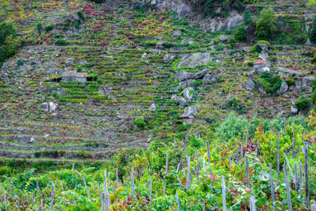 Terraced vineyards and small winery on the steep slopes of Minho, Ribeira Sacra, Chantada, Lugo, Galicia