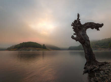 The trunk of a dead tree contemplates a sunrise between mists on the banks of the Minho River, in Portomarin, Galicia