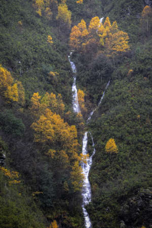 Consecutive Waterfalls between Erica Arborea bushes and birches in Courel