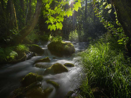 Magical environment created by sunlight filtered by the leaves of maple trees and oaks on a stream in the Ribeira Sacra, Chantada, Galicia