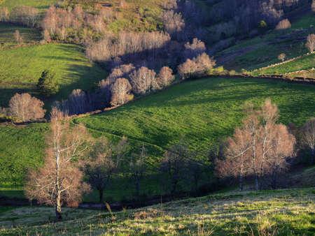 Green Pasture Hills interspersed by Birch Grove in Samos Courel Lugo