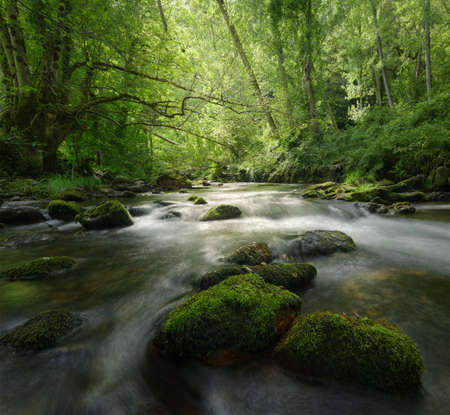 Mossy rocks and ancient trees around the river, in Cervantes, Galicia