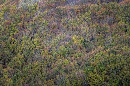 Extensive mixed forest of various deciduous species in Devesa da Rogueira Courel