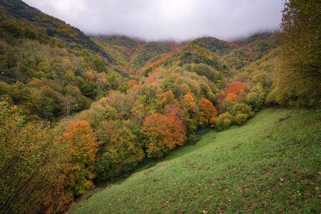 Devesa da Rogueira is the best preserved Galician native forest in Courel Mountain Range Galicia Banco de Imagens