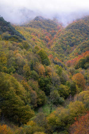 Devesa da Rogueira is an extensive deciduous forest on the foothills of the Courel Mountain range in Galicia