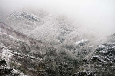 Snowy and foggy atmosphere on a gray and cold winter day in the forested mountains of Oribio Triacastela Galicia